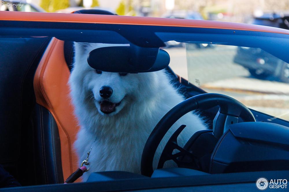 Hond heeft het goed voor elkaar achter stuur van Lamborghini